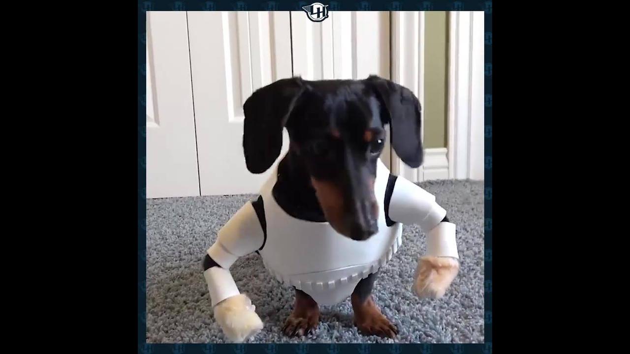 Cachorro Stormtrooper