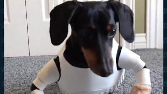 Cachorro Stormtrooper - Os Fãs De Star Wars Irão Pirar Com Esse Cão!