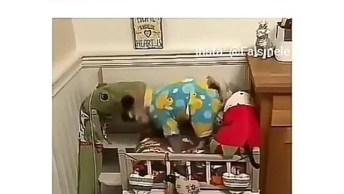 Cachorro Subindo Para Dormir Em Sua Caminha, Até Pijama Ele Tem!