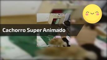 Cachorro Super Animado Para Passear, Ele Esta Muito Ansioso!