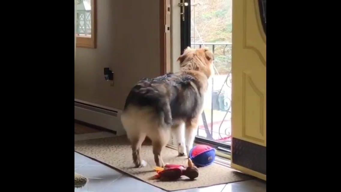 Cachorro super feliz com a chegada de seus tutores