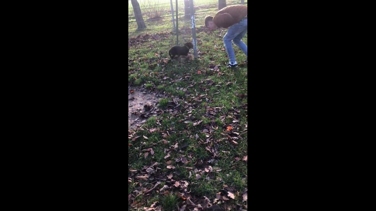 Cachorro super feliz correndo na grama