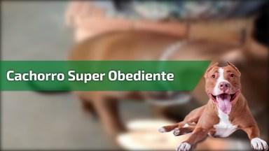 Cachorro Super Obediente, Ele Só Como Quando Seu Dono Deixa, Confira!