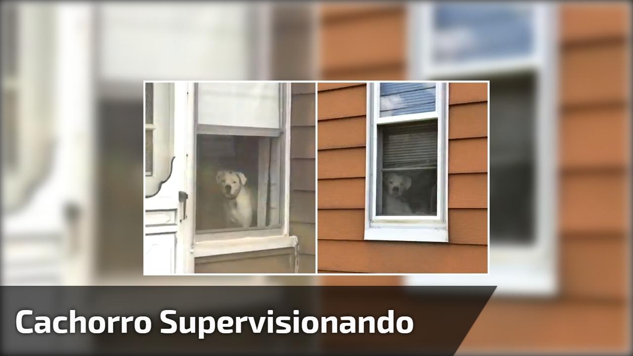 Cachorro supervisionando