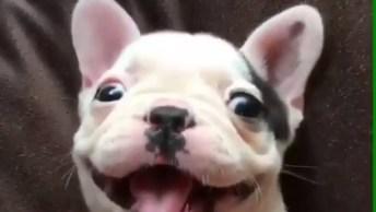Cachorro Tem Um Sorriso Que Contagia, Que Coisa Mais Linda!