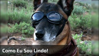 Cachorro Tendo Reação Engraçada Ao Ver Uma Foto Sua, Confira!