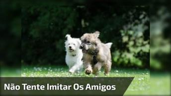Cachorro Tenta Seguir Seu Amiguinho Olha Só O Que Deu, Hahaha!