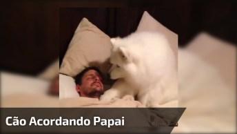 Cachorro Tentando Acordar O Papai, Olha Só Que Delicadeza, É Muito Fofo!
