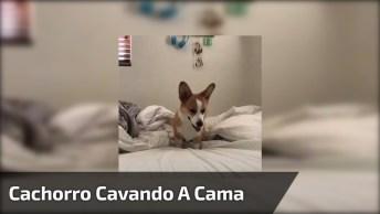 Cachorro Tentando Cavar Na Cama De Seu Dono, Olha Só A Animação!