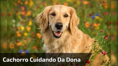 Cachorro Tentando Consolar A Humana Dos Choros, Até Papel Ele Pega!