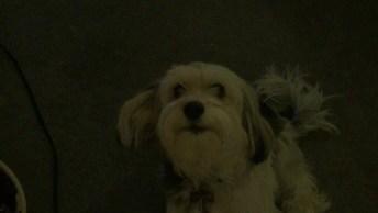 Cachorro Tentando Conversar Com A Humana, Confira O Diálogo Hahaha!
