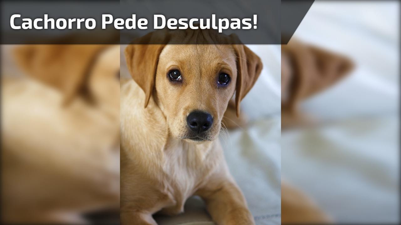 Cachorro pede desculpas!