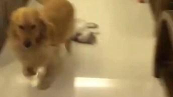Cachorro Tentando Levar Seu Amigo Gatinho Para Passear, Deixa De Preguiça!