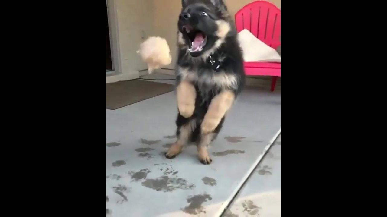 Cachorro tentando pegar a bola em câmera lenta