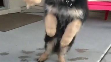Cachorro Tentando Pegar A Bola Em Câmera Lenta, Que Engraçado!