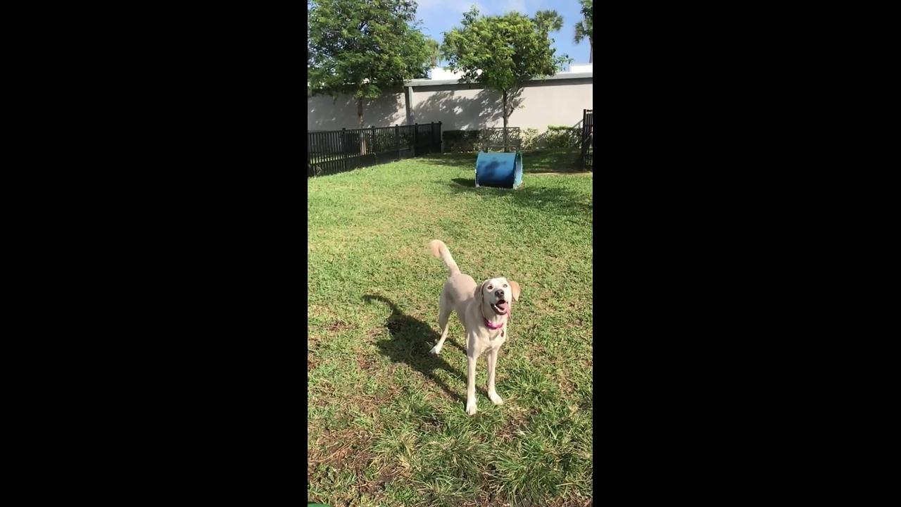 Cachorro tentando pegar bolinhas no ar em câmera lenta