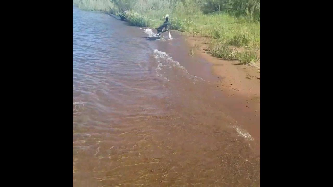 Cachorro tentando pegar umas ondas hahaha