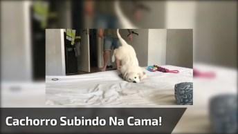 Cachorro Tentando Subir Na Cama De Forma Perfeita, Hahaha!