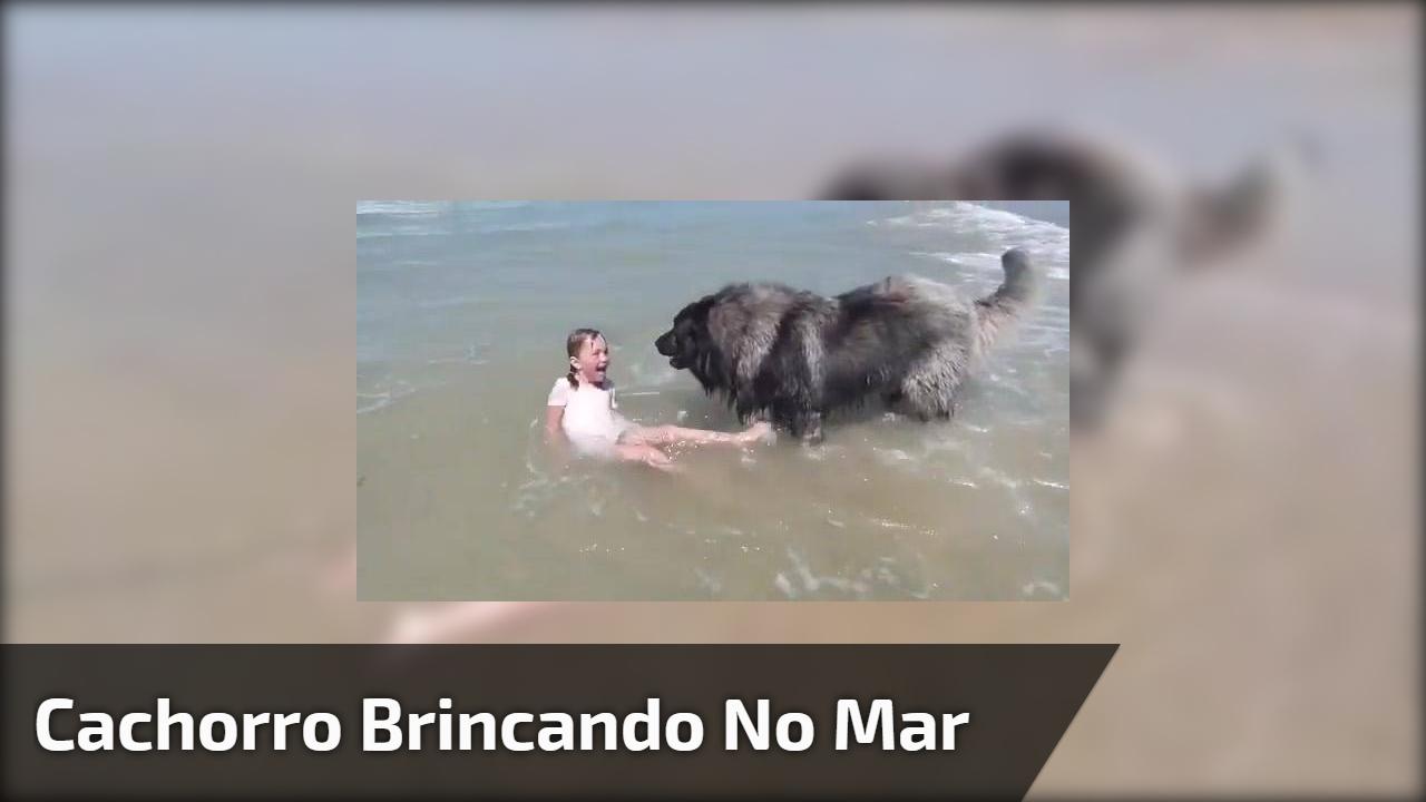 Cachorro brincando no mar