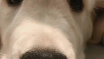 Cachorro Tirando Uma Soneca, Olha Só Estes Olhinhos Quando Abrem!