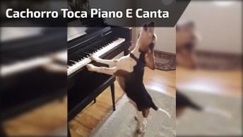 Cachorro Toca Piano E Canta, Olha Só Que Fofura De Animalzinho!