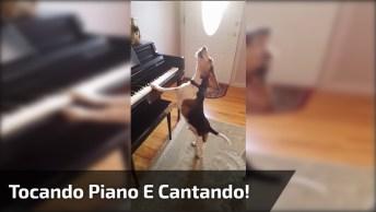 Cachorro Tocando Piano E Cantando, Muito Lindo E Fofo De Se Ver!