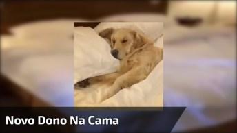 Cachorro Toma Conta Da Cama Dos Humanos Hahaha, Que Ousadia!