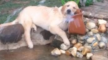 Cachorro Tomando Água Deitado, Esse É Muito Preguiçoso Hein!