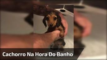 Cachorro Tomando Banho - Ele É Pequeno De Tamanho, Mas Grande Em Fofura!