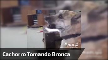 Cachorro Tomando Bronca Por Estar Correndo Atrás Dos Moleques De Bike!