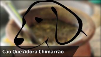 Cachorro Tomando Chimarrão, Por Essa Ninguém Esperava, Confira!