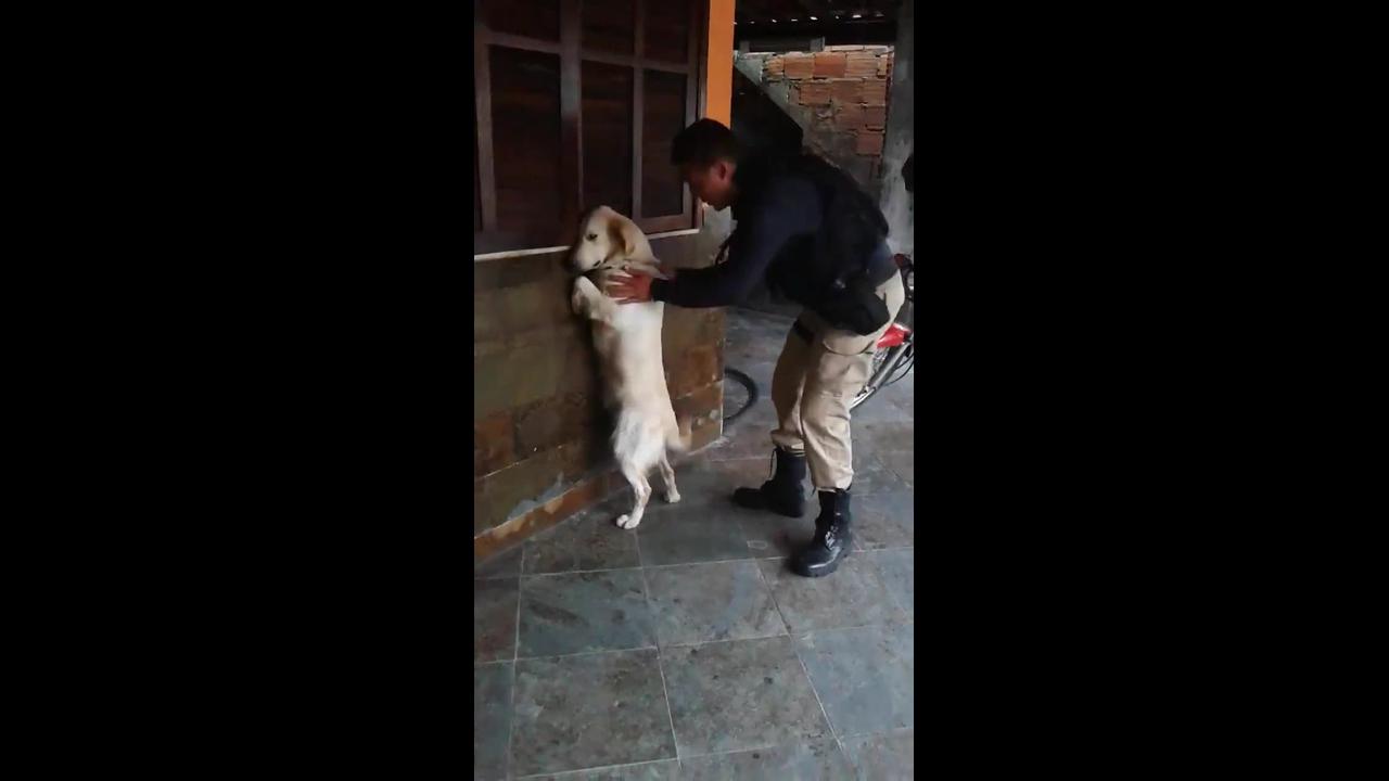 Cachorro tomando geral da polícia