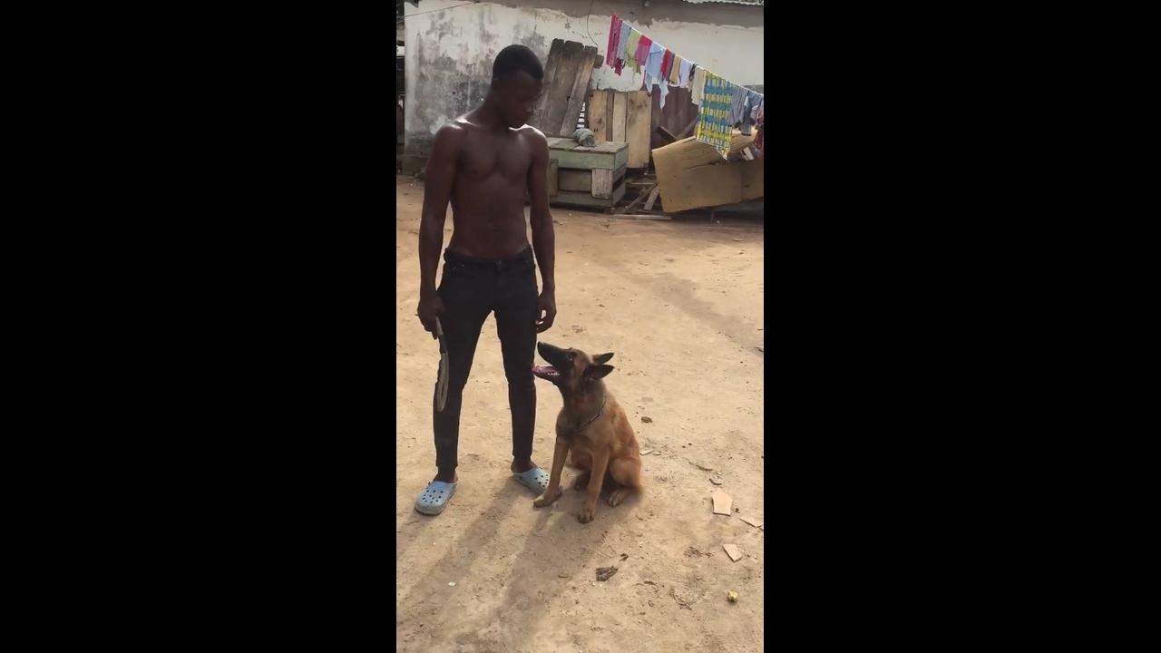 Cachorro treinado a fazer várias coisas