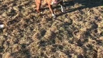 Cachorro Treinado Brincando Na Areia, Você Vai Gostar De Ver Essa Diversão!