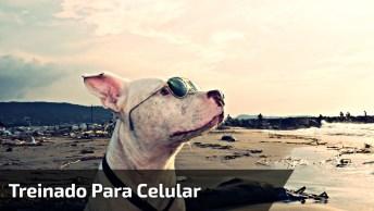 Cachorro Treinado Para Não Deixar Ninguém Pegar O Celular!