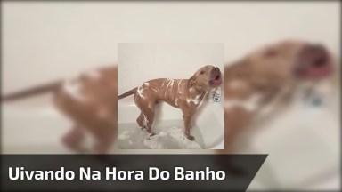 Cachorro Uivando Na Hora Do Banho, Olha Só A Choradeira Deste Amiguinho!