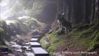 Cachorro Uivando, Que Lindo Animal Para Postar No Facebook!