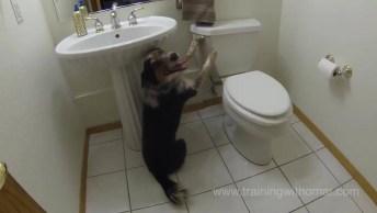 Cachorro Usando Banheiro E Dando Descarga, Que Inteligente Ele É!