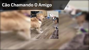 Cachorro Vai Chamar O Amiguinho Pra Brinca, Mais Olha A Braveza!