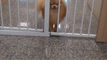 Cachorro Vai Contra O Que Dizem E Passa Por Lugar Inusitado!