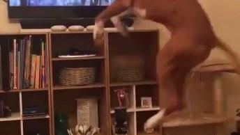 Cachorro Vê Comercial Com Cachorro Na Cama Elástica, Que Começa A Saltar!