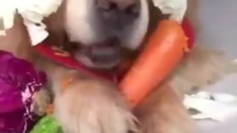 Cachorro Vegetariano, Comendo Cenoura E Coberto Com Outros Legumes Hahaha!