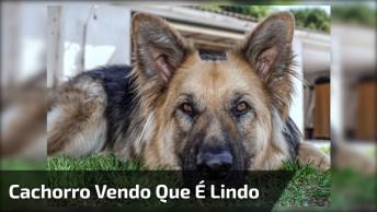Cachorro Vendo Ele No Celular E Percebendo Que É Lindo, Confira!
