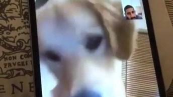 Cachorro Vendo Seu Dono Pelo Celular, Veja A Reação Deste Amiguinho!
