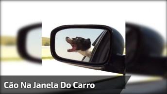 Cachorro Viajando Na Janela Do Carro, Pode Ser Fofinho, Mas É Preciso Cuidado!