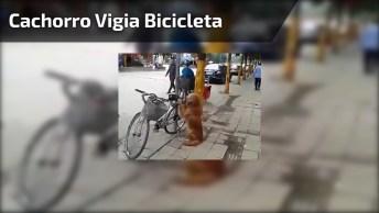 Cachorro Vigia Bicicleta De Seu Dono Até Ele Voltar, É Muito Fofo!