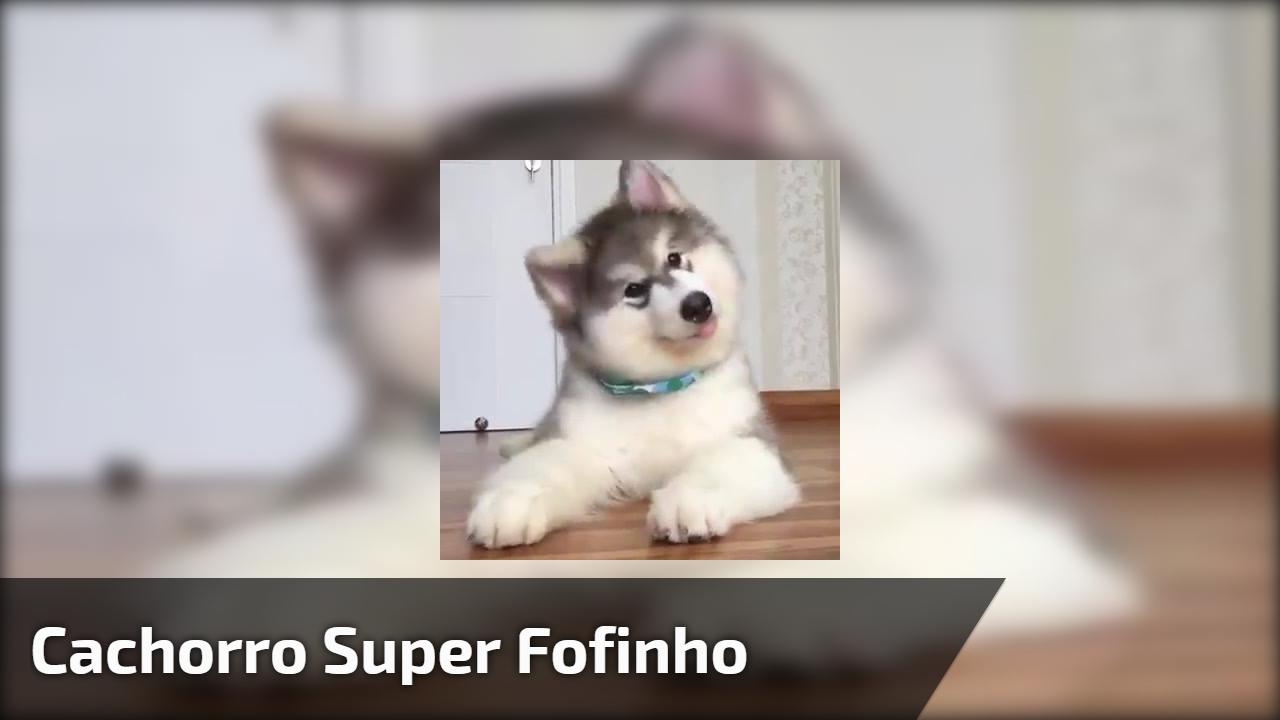 Cachorro super fofinho