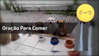 Cachorros Aguardam A Oração Para Poder Comer A Ração, Muito Lindos!