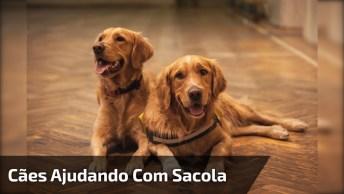 Cachorros Ajudam A Descarregar A Compra Do Carro, Que Lindo Trabalho Em Equipe!