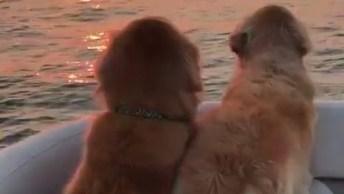 Cachorros Apreciando O Pôr Do Sol! O Vídeo Mais Lindo Que Você Vai Ver!